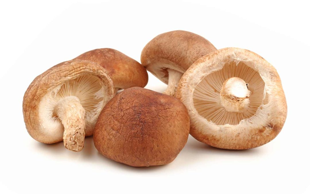 Fungo Shiitake, una delle specie orientali più coltivate al mondo